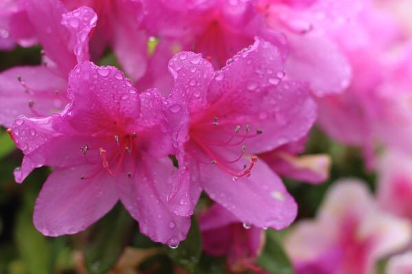 梅雨前の女子力UP⤴︎⤴︎